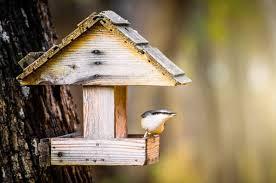 Хранилки за птици и катерички. Napravi Si Sam Hranilka Za Ptici Bdzp