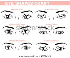 eye shape chart eyes face chart blank template makeup stock vector hd royalty free