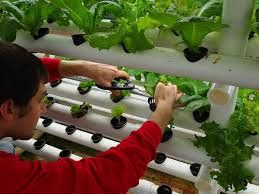 indoor hydroponic vegetable garden. Image Of: Hydroponic Vegetable Gardening Grow Indoor Garden