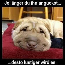 Tiere Sie Bringen Uns Immer Zum Lachen Home Facebook