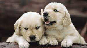 Puppy Wallpaper Cute Babies Wallpapers ...