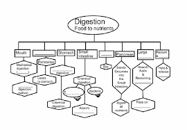 Unit 6 The Digestive System Hawk Biology