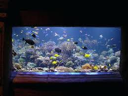 r fish bedding aquariums r fish tanks decoration
