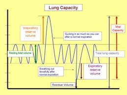 Normal Lung Volumes And Capacities Chart Lung Volumes Following The Various Comments Quit Support