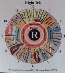 Iridology Diagnosis Of Past Present And Future Illness