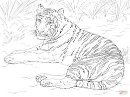 Small Picture Siberian Tiger Laying down coloring page Free Printable Coloring