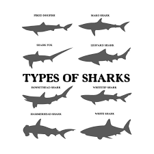 Types Of Sharks Chart Types Of Sharks T Shirt Colorful Ocean Tee Shirt