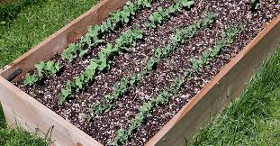 how to start a raised garden bed ifa