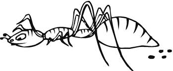 Small Picture Printable Ant Coloring Coloring Coloring Pages