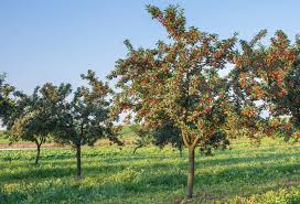 FafardGrowing Cherry TreesCherry Fruit Tree Care