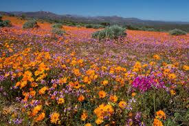 south african flower safari