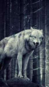 Grey Wolf iPhone Wallpapers - Top Free ...