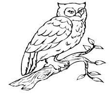 Small Picture Cartoon Snowy Owl Ptrkeyac adult