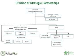 History And Current Organizational Structure Of Africarice