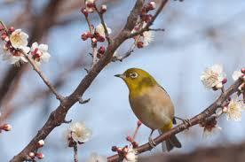 「梅の木」の画像検索結果