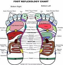 Left Foot Organ Chart 31 Printable Foot Reflexology Charts Maps Template Lab