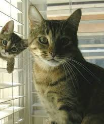 cats and kittens pictures. Contemporary Kittens Chip Off The Old Block  And Cats Kittens Pictures A