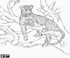 Amur Leopard Colouring Pages Parenting Coloring Pages Animal