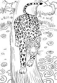 jaguar line drawing by zotz