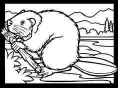 Beaver Coloring Page Beautiful Color Page Home Coloring Pages