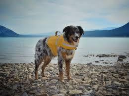 <b>Hurtta Life Savior</b> – Dogs That Hike