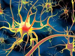 Нервная система человека класс  Спинной мозг