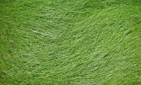 tall grass texture seamless. Grass Texture By Jshei Tall Seamless