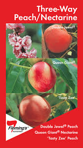 Apple Trees Produced By Waimea Nurseries 100s Of Varieties Triple Grafted Fruit Trees