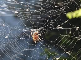 Busy Web Photograph by Shawna Milligan
