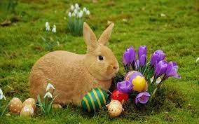 Happy Easter Bunny Desktop Wallpaper ...