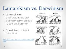 Theory Evolution Difference Between Lamarck Darwin Theory
