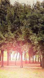 Tree Wood Grass Garden Sun Light Nature ...