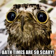 bath times are so scary! - Plaintive Potoo | Meme Generator via Relatably.com