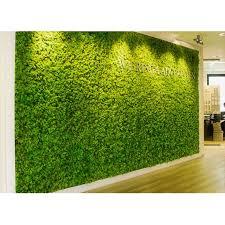 reindeer moss walls with letters