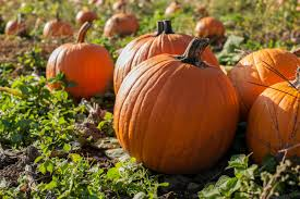 Image result for harvest time