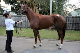 inglis 2016 australian broodmare and weanling lot 723 new york rockstar