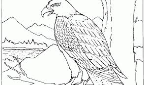 Small Picture Bald Eagle Coloring Page Coloring Page Bald Eagle Coloring Page In