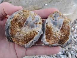 Image result for sponge in flint
