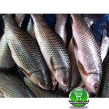 Nola fish 1 kg (After Cutting) walibazar.com is best online bazar