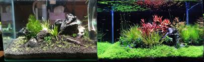 Best Low Light Carpet Plant How To Grow Carpet Plants Without Co2 The 2hr Aquarist