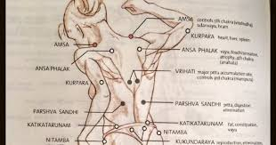 Lajja Gauri 108 Marma Points Cover The Human Body