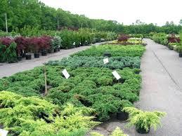 gaskos garden center family farm the plant warehouse in the most amazing nursery farm gaskos garden center