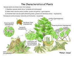 Angiosperm Vs Gymnosperm Venn Diagram Plant Classification Smore Newsletters
