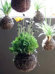 Decorating With Moss Balls Kokedama Japanese moss ball garden small garden ideas 100