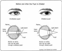 Diagram Of The Eye Before And After Dilated Eye Exam