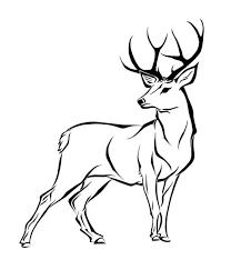 Drawings Of Deer Under Fontanacountryinn Com