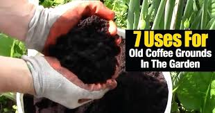are coffee grounds good for the garden 7 uses for old coffee grounds in the garden