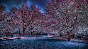Winter Winters Mind Games Beautiful Glowing Snow Sheen Pretty Trees