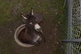 Ass hole : funny