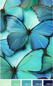 Colors That Match Turquoise Best 25 Turquoise Color Schemes Ideas On Pinterest Turquoise